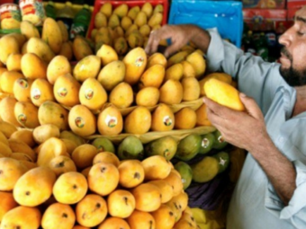 The best mangoes come from…..