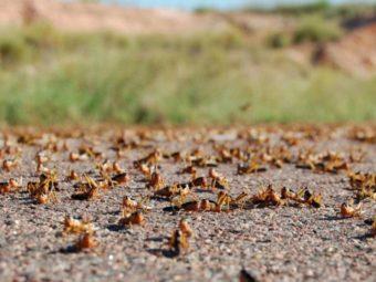 Locust control measures underway.