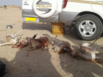 OMR3,000 fines for gazelle hunters in Oman